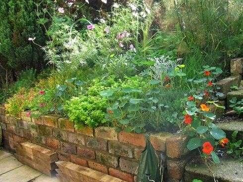 травянистые растения в саду