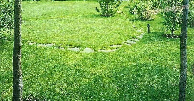 фото газонной травы овсяница красная