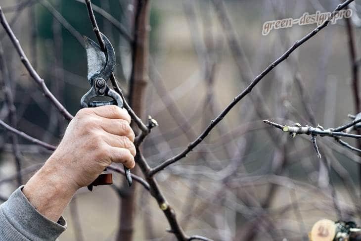 обрезка деревев весной