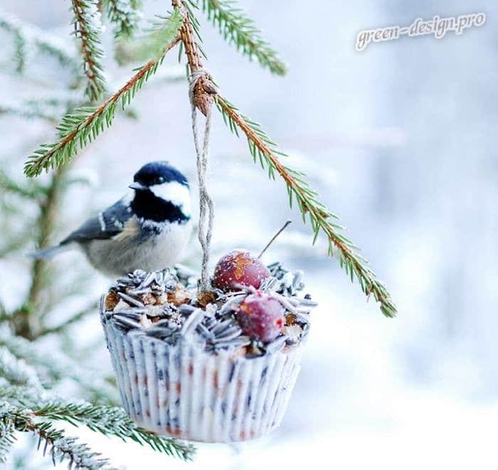 Птичий пирог