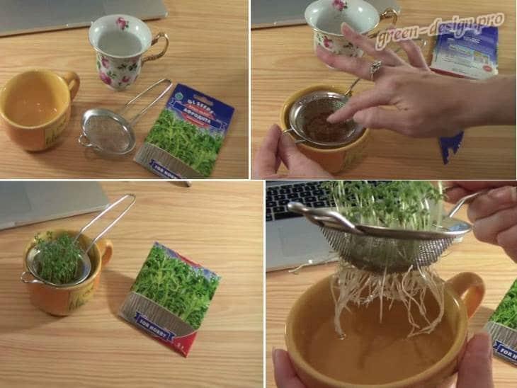 Выращивание кресс-салата в чайном сите