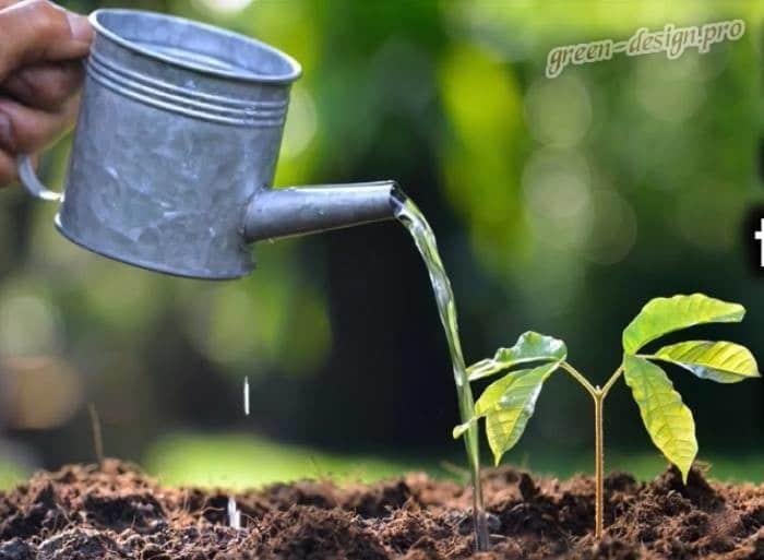 Использование медного купороса как удобрение