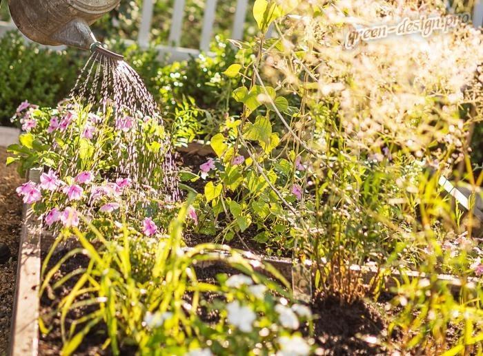 Когда лучше поливать огород