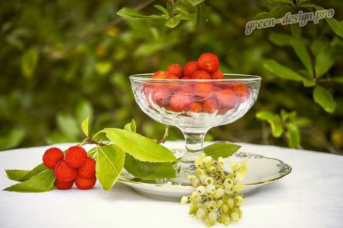 Польза ягод Арбутуса