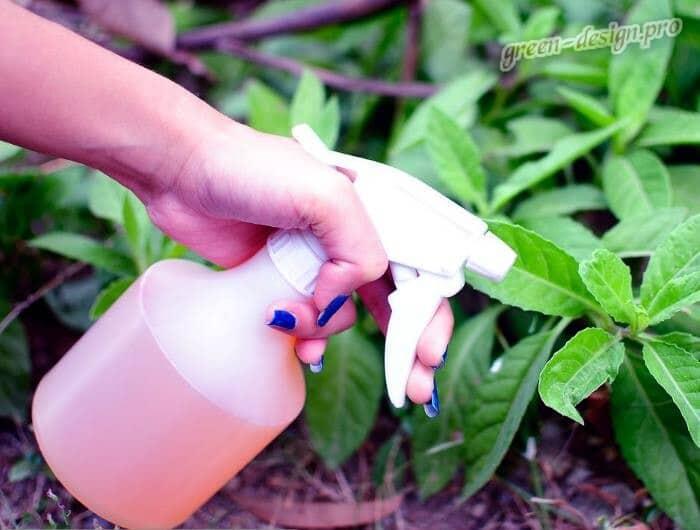 Методы борьбы со слизнями: опрыскивание растений