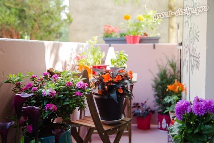 Летние цветы на балконе