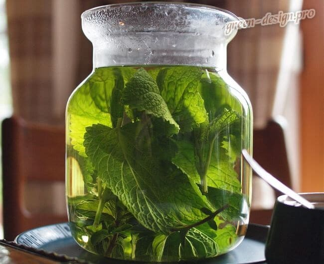 Фото чая с травы мелиссы