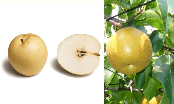 Азиатская груша: фото плодов